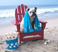 bulldog sitting on a chair